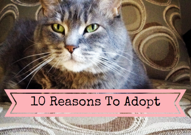 10_reasons_to_adopt